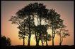 多棵及树群0020,多棵及树群,植物,