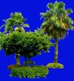 多棵及树群0022,多棵及树群,植物,