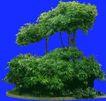 多棵及树群0023,多棵及树群,植物,