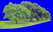 多棵及树群0024,多棵及树群,植物,