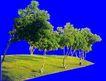 多棵及树群0026,多棵及树群,植物,