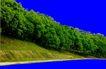 多棵及树群0027,多棵及树群,植物,