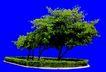 多棵及树群0029,多棵及树群,植物,