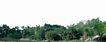 多棵及树群0032,多棵及树群,植物,