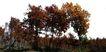 多棵及树群0034,多棵及树群,植物,