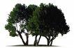 多棵及树群0037,多棵及树群,植物,