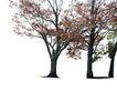 多棵及树群0040,多棵及树群,植物,