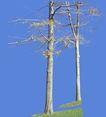 多棵及树群0041,多棵及树群,植物,