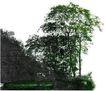 多棵及树群0053,多棵及树群,植物,