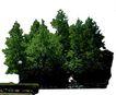 多棵及树群0057,多棵及树群,植物,