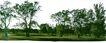 多棵及树群0063,多棵及树群,植物,