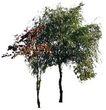 多棵及树群0064,多棵及树群,植物,