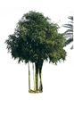 多棵及树群0065,多棵及树群,植物,