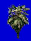 葵0009,葵,植物,