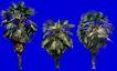 葵0016,葵,植物,