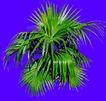 葵0018,葵,植物,