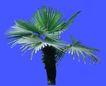 葵0019,葵,植物,