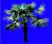 葵0020,葵,植物,