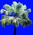葵0022,葵,植物,