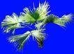 葵0023,葵,植物,