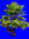 葵0026,葵,植物,