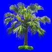 葵0028,葵,植物,