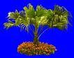 葵0029,葵,植物,