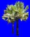 葵0030,葵,植物,