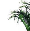 热带树群0002,热带树群,植物,