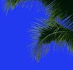 热带树群0004,热带树群,植物,