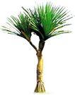 热带树群0005,热带树群,植物,