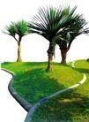 热带树群0007,热带树群,植物,