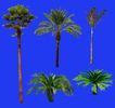 热带树群0008,热带树群,植物,
