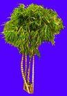 热带树群0012,热带树群,植物,
