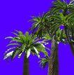 热带树群0013,热带树群,植物,