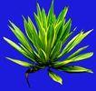 热带树群0018,热带树群,植物,