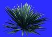 热带树群0020,热带树群,植物,