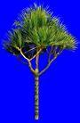热带树群0023,热带树群,植物,
