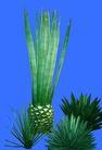 热带树群0024,热带树群,植物,
