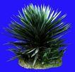 热带树群0025,热带树群,植物,