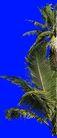 热带树群0026,热带树群,植物,