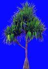 热带树群0027,热带树群,植物,