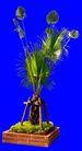 热带树群0029,热带树群,植物,