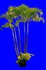 热带树群0030,热带树群,植物,