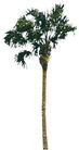 棕榈及椰树0002,棕榈及椰树,植物,