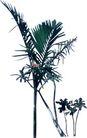 棕榈及椰树0003,棕榈及椰树,植物,