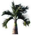 棕榈及椰树0004,棕榈及椰树,植物,