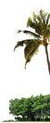 棕榈及椰树0007,棕榈及椰树,植物,