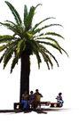 棕榈及椰树0008,棕榈及椰树,植物,
