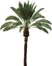 棕榈及椰树0009,棕榈及椰树,植物,